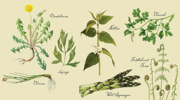 Spring Herbs: Bitter Is Better