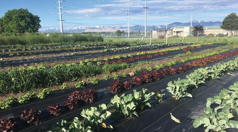 Gardens of Hope - Devour Utah